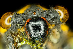 Extreme insect closeup. Royalty Free Stock Images