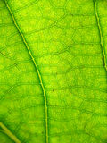 Extreme leaf closeup royalty free stock photos