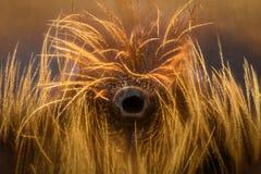 Extreme lineare Wiedergabe - zentrale Ocelli Auge der Biene, lineare Wiedergabe 10x stockbilder