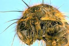 Extreme macro of brown caterpillar royalty free stock image