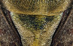 Extreme macro of bug royalty free stock images