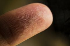 An extreme macro closeup of a fingertip. An anatomical picture of a fingertip. Extreme closeup macro shot with texture of the fingerprint clearly visible royalty free stock photography