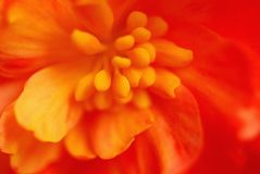Extreme macro flower Royalty Free Stock Images