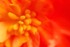 Extreme macro flower Stock Images