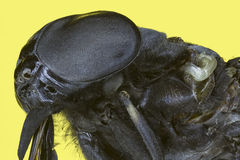 Extreme macro insect fly Royalty Free Stock Image