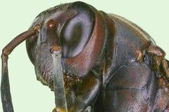 Extreme macro paper wasp Stock Image