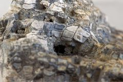 Extreme macro photo of fossil coral Royalty Free Stock Photo