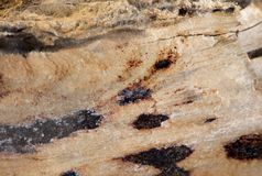 Extreme macro photo of petrified wood Stock Images