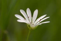 Extreme macro photo of small white flower Royalty Free Stock Photos