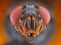 Extreme sharp close up portrait of fly Stock Photography