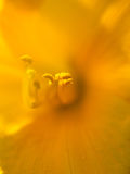 Extreme macro shot. Abstract background with pistil and stamen o Royalty Free Stock Photo