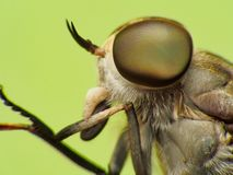 Extreme Macro Shot Eye Of Dragonfly In Wild. Royalty Free Stock Image