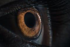 Extreme macro shot of human eye pupil. Extreme closeup of human brown eye - pupil iris royalty free stock photo