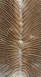 Extreme macro view of a Mushroom coral. Royalty Free Stock Images