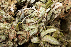 Marijuana Bud Macro Stock Images