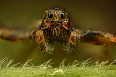 Extreme magnification - Brown spider Royalty Free Stock Photography