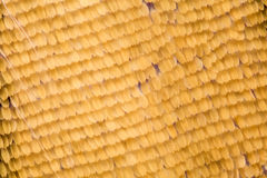 Extreme magnification - Butterfly wing scales, Iphiclides podalirius,10x Royalty Free Stock Images