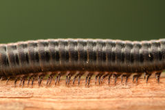 Extreme magnification - Centipede Stock Photo