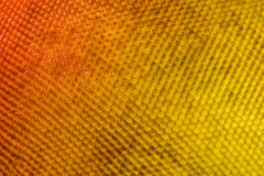 Extreme magnification - Fly compound eye under the microscope Royalty Free Stock Images