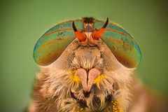 Extreme magnification - Horse fly head and eyes, Hybomitra Royalty Free Stock Image