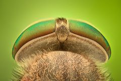 Extreme magnification - Horsefly. Under the microscope Stock Images