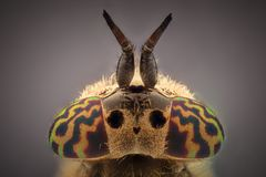 Extreme magnification - Horsefly. Under the microscope Royalty Free Stock Photo