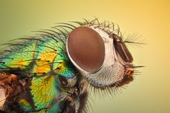 Extreme magnification - House fly. Closeup Royalty Free Stock Photo