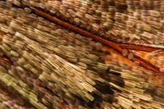Extreme magnification - Moth and butterfly wing Stock Image