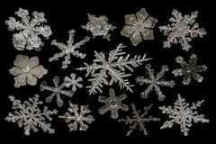 Extreme magnification - Real snowflake compilation on black background Stock Photos