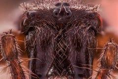 Extreme magnification - Spider eyes arrangement, Araneus diadematus. Extreme magnification - Spider eyes, arrangement, Araneus diadematus Royalty Free Stock Images