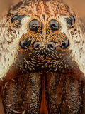 Extreme magnification - Spider eyes, front view Royalty Free Stock Image