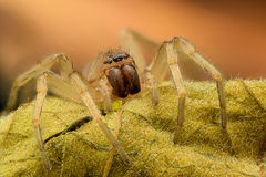 Extreme magnification - Spider on a leaf Royalty Free Stock Photography