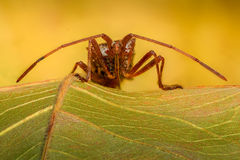 Extreme magnification - Stink Bug on a leaf Royalty Free Stock Photography