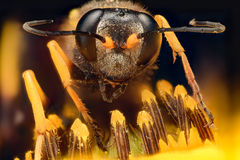 Extreme magnification - Wasp on a flower stock photo