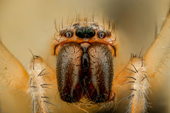 Extreme magnification - White spider Royalty Free Stock Photos