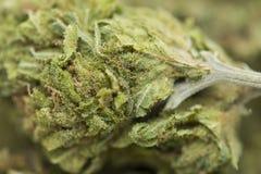 Extreme medical marijuana closeup Stock Photos