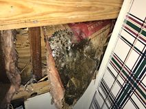 Extreme Mold on Ceiling and insulation collapsed during hurricane Stock Images