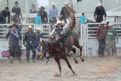 Extreme Rodeo royalty free stock images