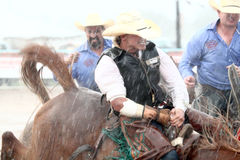 Extreme Rodeo. Bareback bronc cowboy grits his teeth as he rides his horse in extreme rain during The Heat III: Bikini Barrel Race and Roughstock Challenge rodeo royalty free stock image