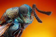 Extreme scharfe und ausführliche Studie der 2 Millimeter-Wespe Stockfoto