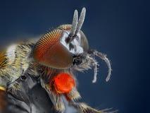 Extreme scharfe und ausführliche Studie der Simuliidaefliege stockbilder