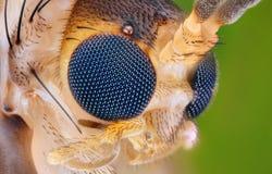 Extreme scherpe en gedetailleerde studie van insecthoofd Royalty-vrije Stock Foto's