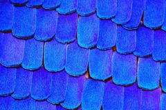 Extreme sharp and detailed butterfly wing pattern Stock Images