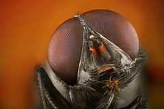 Extreme sharp and detailed study of fly Stock Image