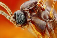 Extreme sharp and detailed study of small fly Stock Image
