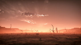 Extreme spooky dry misty desert landscape with dead trees at sunset. Cloudy sky. Royalty Free Stock Images