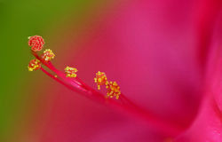 Extreme stamen and pistil macro Stock Photos