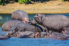 The extreme tourism in Okavango Delta Royalty Free Stock Photo