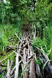 Extreme tropical path bridge via guag mire morass backwater with royalty free stock photography