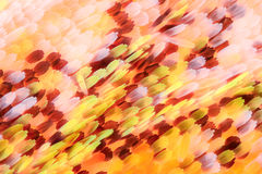 Extreme vergroting - de schalen van de Vlindervleugel Royalty-vrije Stock Afbeelding